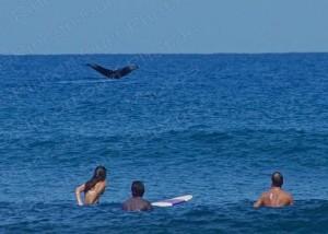 Whale Pic 2