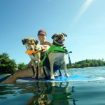 Rincon Paddleboards is Pet Friendly!