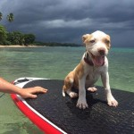 This little puppy is having a great day on the water with Rincon Paddle Boards!
