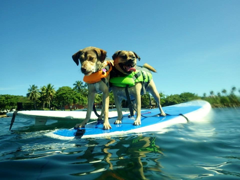 Stand Up Paddle Board isn't just for humans anymore!
